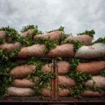 тюки с урожаем чая мате, ветками и листьями падуба парагвайского