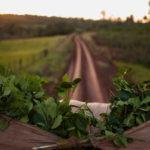 листья падуба парагвайского, чай мате