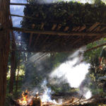 сушка сырья для чая мате, листья падуба парагвайского