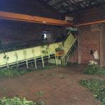 промышленное производство чая матэ