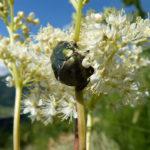 жук на цветке