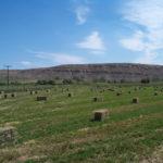 стоги люцерны, сено, корм для животных
