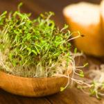 ростки люцерны